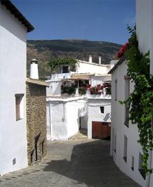 DESCUBRE CAPILEIRA